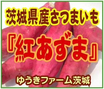 新さつまい芋~「ゆうきファーム茨城」※茨城県