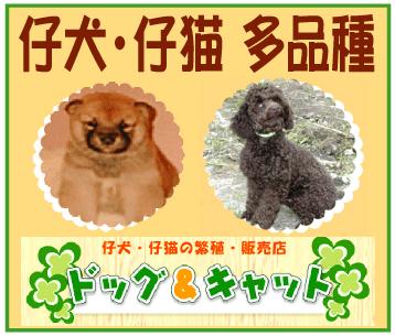 仔犬・仔猫の繁殖・販売~「ドッグ&キャット」※和歌山県