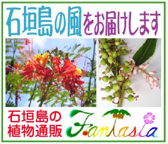 石垣島の植物通販~「ファンタジア」※沖縄県