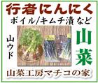 山菜・漬物~「山菜工房マチコの家」※北海道