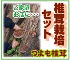 椎茸栽培セット~「つよも椎茸」※香川県