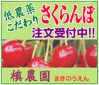 高級さくらんぼ~「槙農園」※山形県