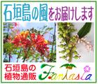 石垣島の植物...