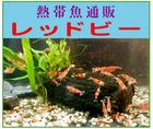 「熱帯魚販売/レッドビー」※和歌山県