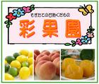 「甘熟くだもの/彩果園」※和歌山県